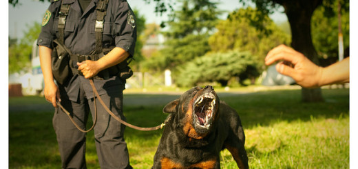 Dog angry